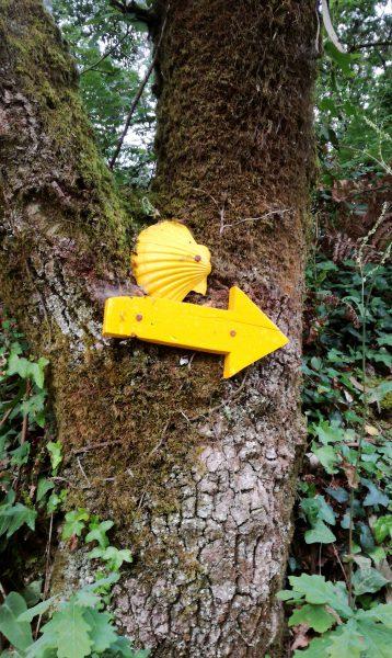 Auf der Jagd nach dem gelben Pfeil